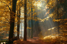 trees with sunbeams
